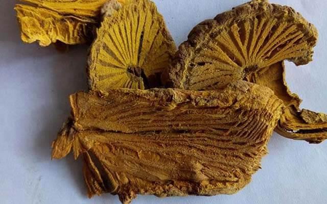 Khi nào nên dùng thảo dược Cây Vàng Đắng và sử dụng bao lâu?