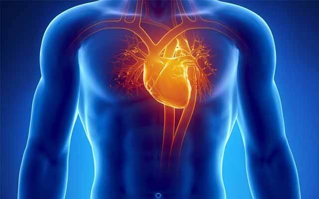 giúp giảm cholesterol, giúp tăng giãn nở, co bóp hoạt động của thần kinh giao cảm ở tim