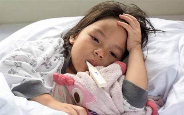 điều trị bệnh sốt rét, các bệnh về gan, mật, đau mắt.