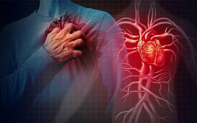 Hạt cây sừng trâu dùng để điều chế thuốc trị bệnh tim