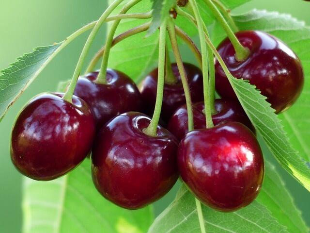 Cherry có rất nhiều dưỡng chất