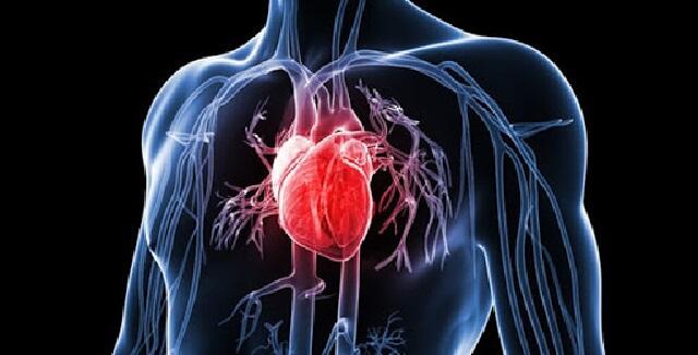 Thuốc Cortonyl 25ml trị chứng ngất do suy tim