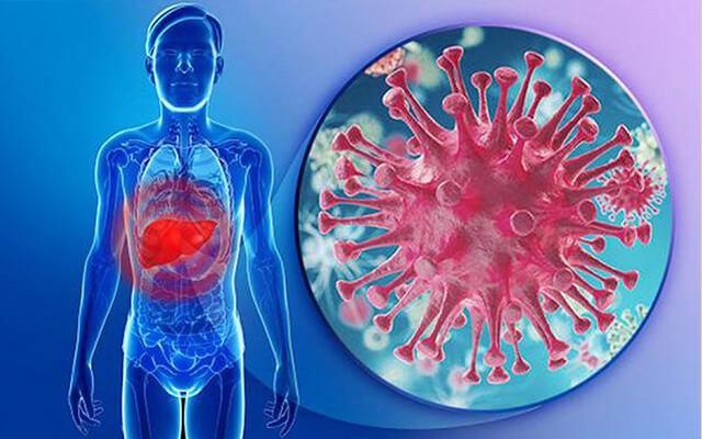 làm hạ đường huyết, ngăn ngừa kết tụ tiểu cầu, ức chế virus viêm gan B