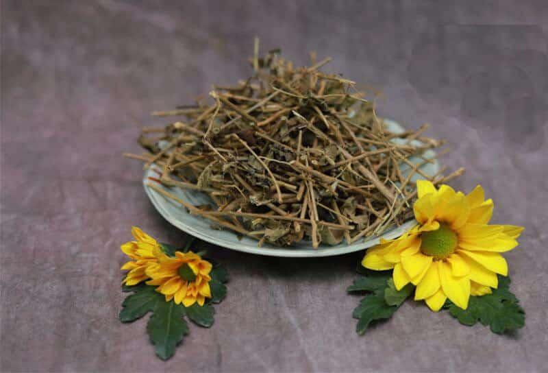 Khi nào nên dùng thảo dược Cà Gai Leo và sử dụng bao lâu?