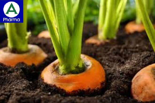 Cà rốt chứa lượng lớn Kali và Beta-carotene
