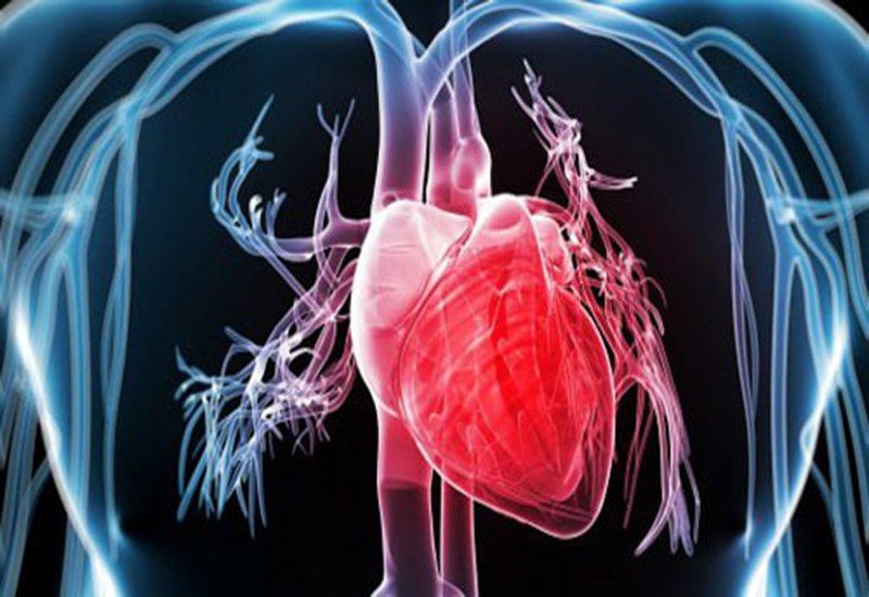 Tác dụng tăng sức khỏe tim mạch