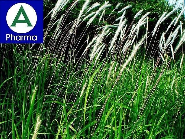 Giới thiệu sơ lược về dược liệu cây cỏ tranh