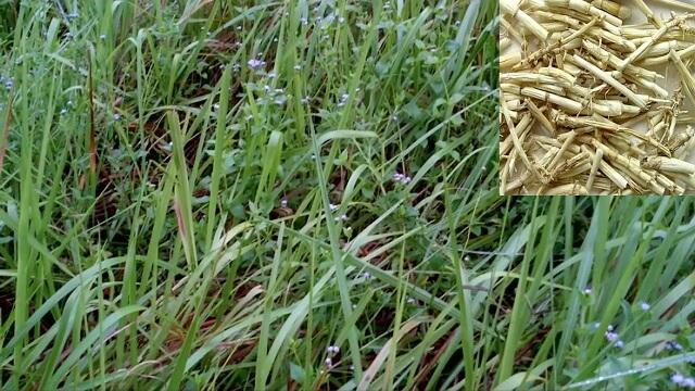 Lựa chọn nơi bán và sản phẩm cỏ bợ chất lượng tốt
