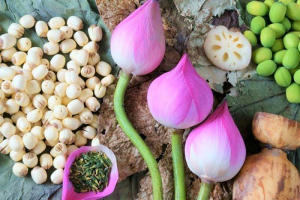 cây hoa sen