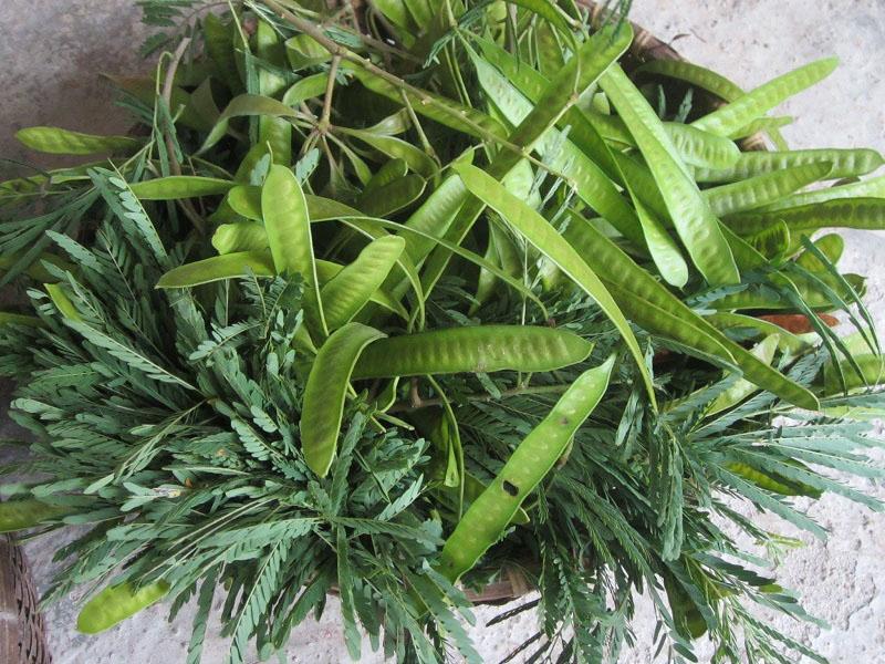 cây Keo Dậu