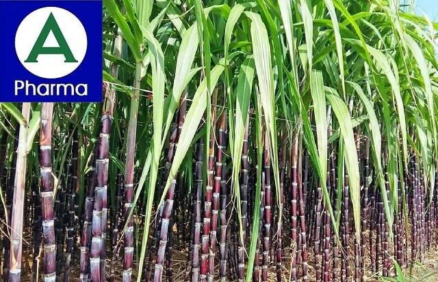 Giới thiệu sơ lược về thảo dược mía đường