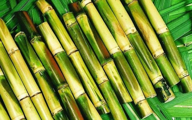 Bộ phận cây mía đường dùng làm dược liệu