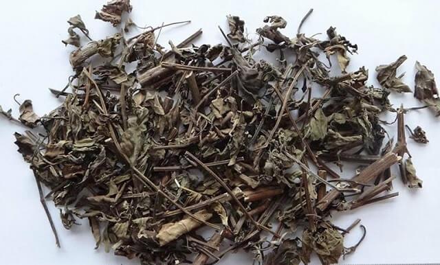 Bộ phận cây râu mèo dùng làm dược liệu