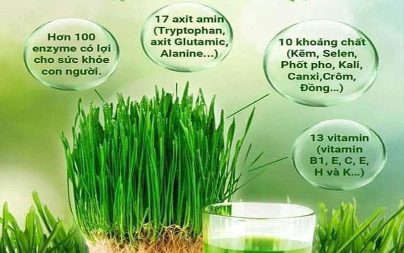 Thảnh phần dinh dưỡng của cỏ lúa mì