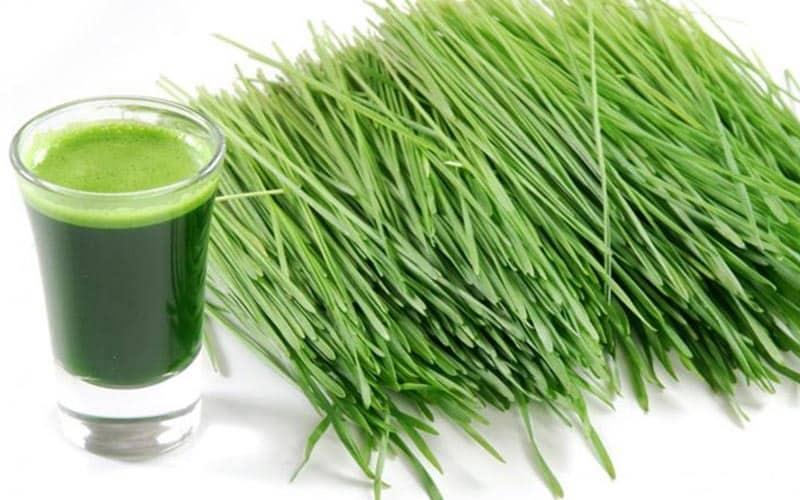 Dinh dưỡng từ nước ép cỏ lúa mì