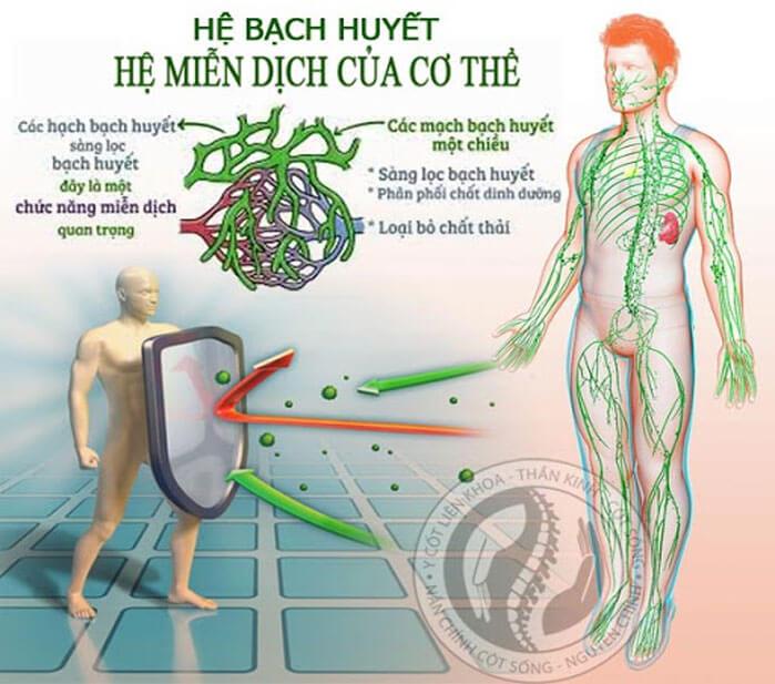 hệ bạch huyết & miễn dịch