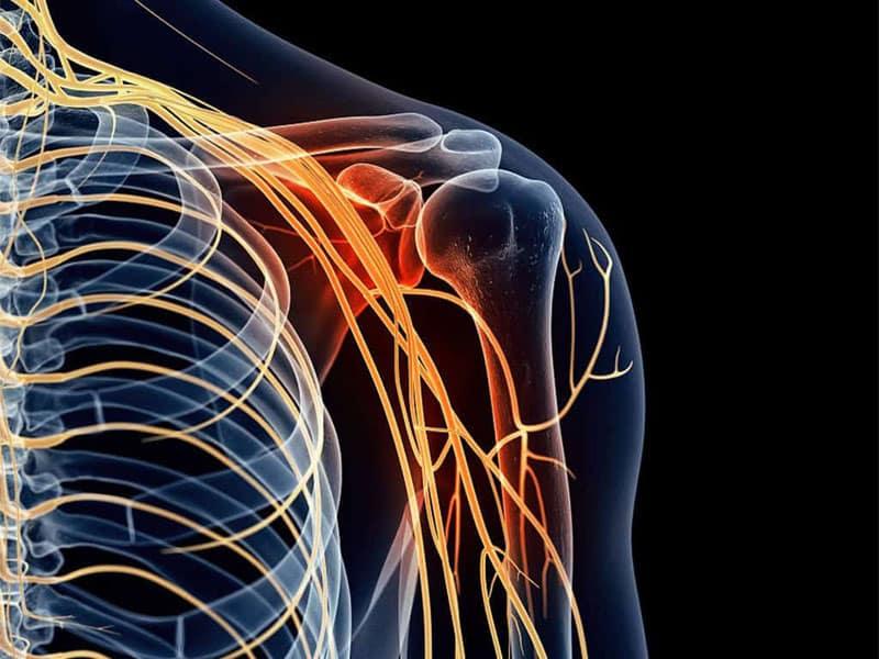 Hệ thống cơ xương khớp thuộc bộ phận cơ thể người