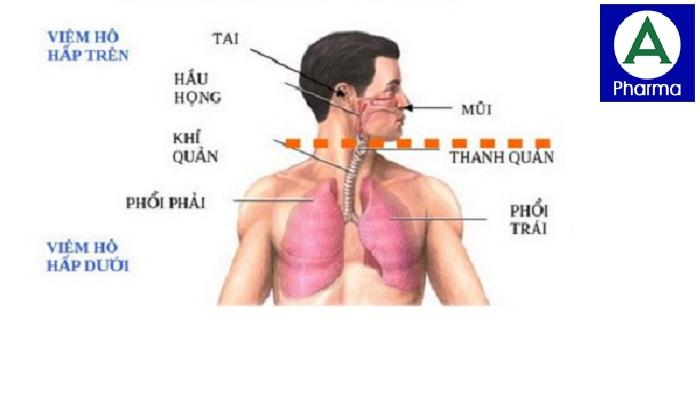 Thuốc Klacid Forte được chỉ định trong các bệnh viêm đường hô hấp trên và dưới