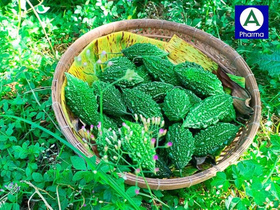 Sản phẩm trà có thành phần chủ yếu từ khổ qua rừng tự nhiên