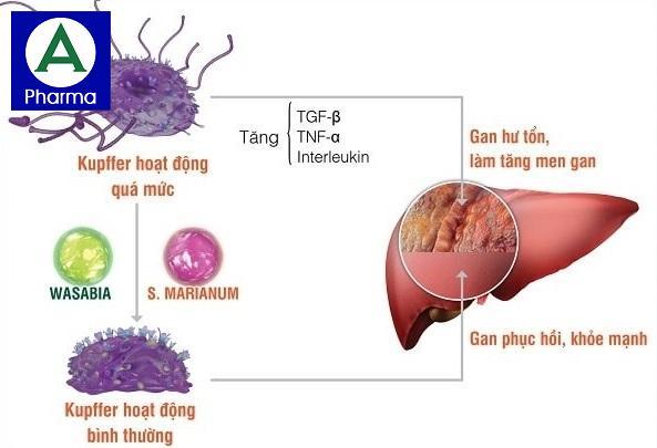Bệnh tăng men gan