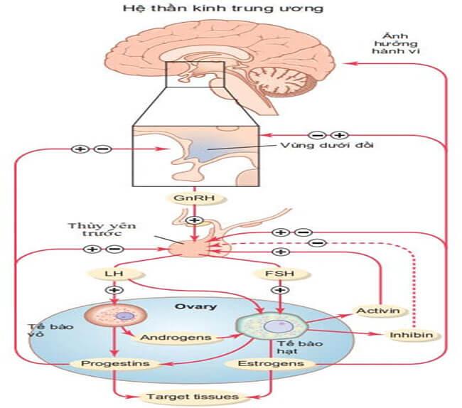 hệ thần kinh và hệ nội tiết