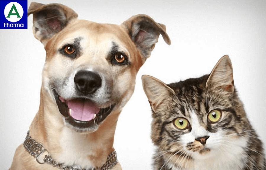 Chó, mèo sẽ là người bạn tốt với người bệnh